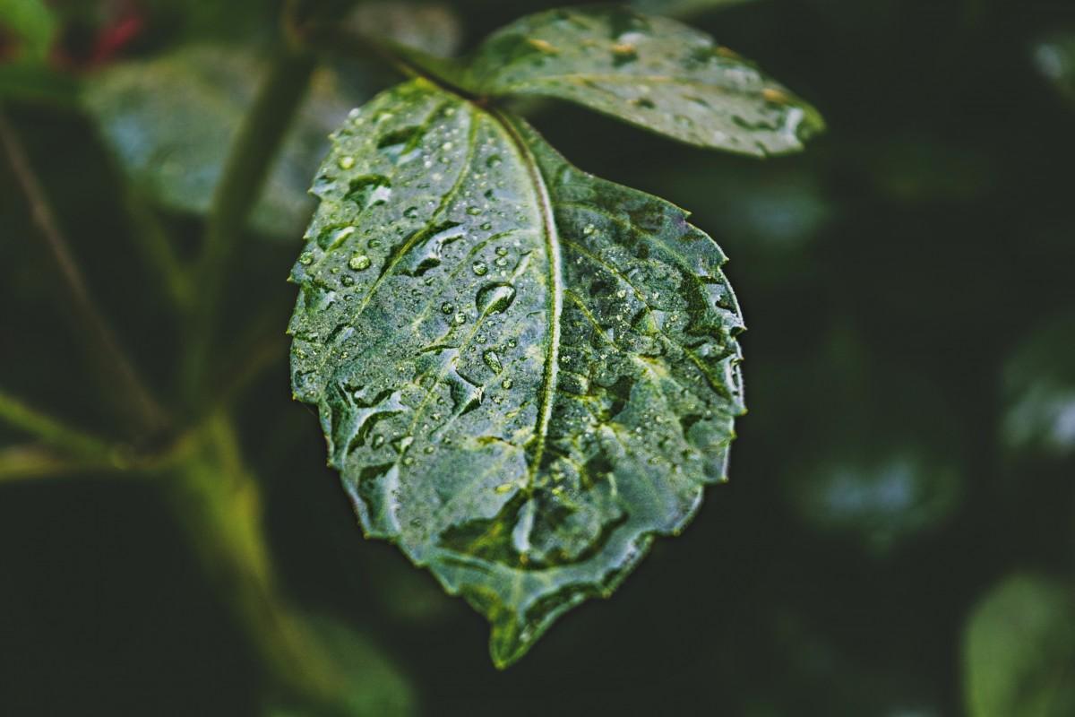 filmer sous la pluie